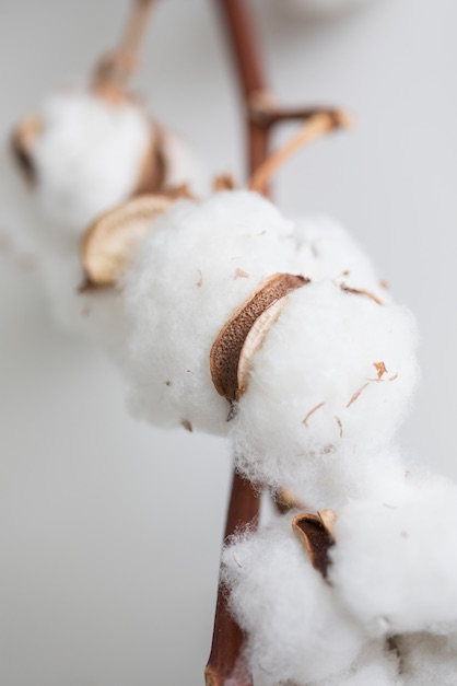 GMO-free textiles – an issue that is causing more and more consumers to turn to organic cotton. They are also happy to pay higher prices for it. © Hohenstein