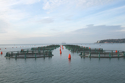 A modern seawater fish farm off the coast of Slovenia (c) 2020 Monforts